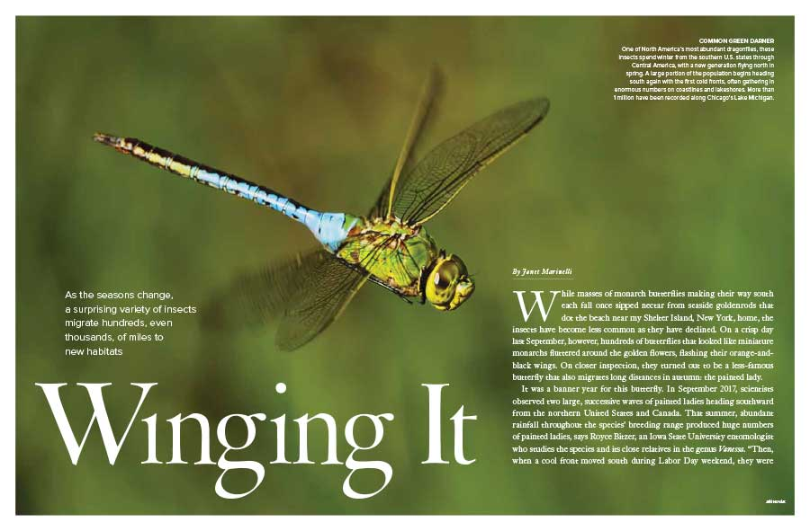 Winging It: Migrating Insects