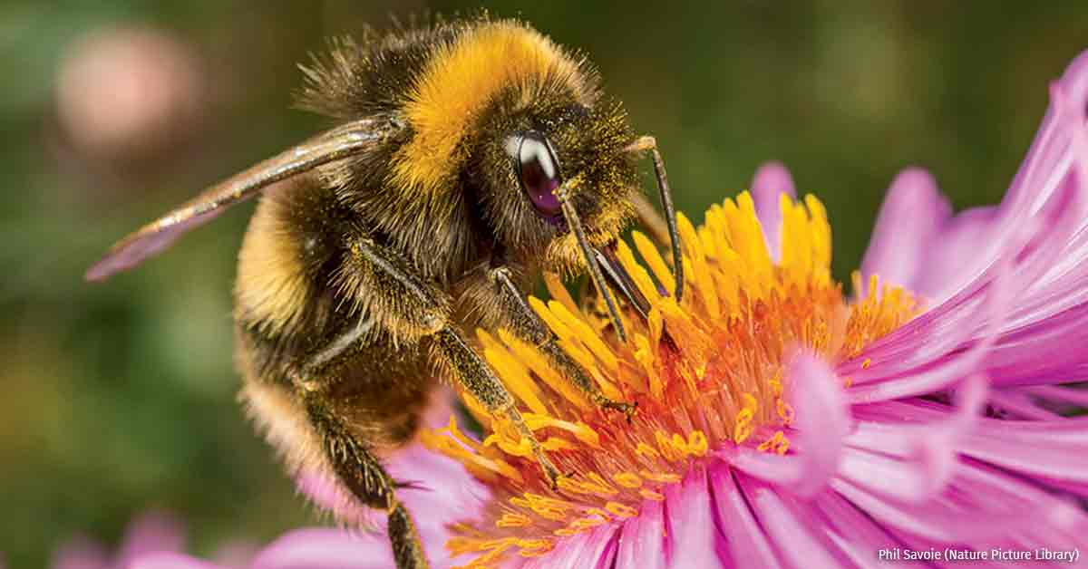 Nixing Neonics to Protect Pollinators
