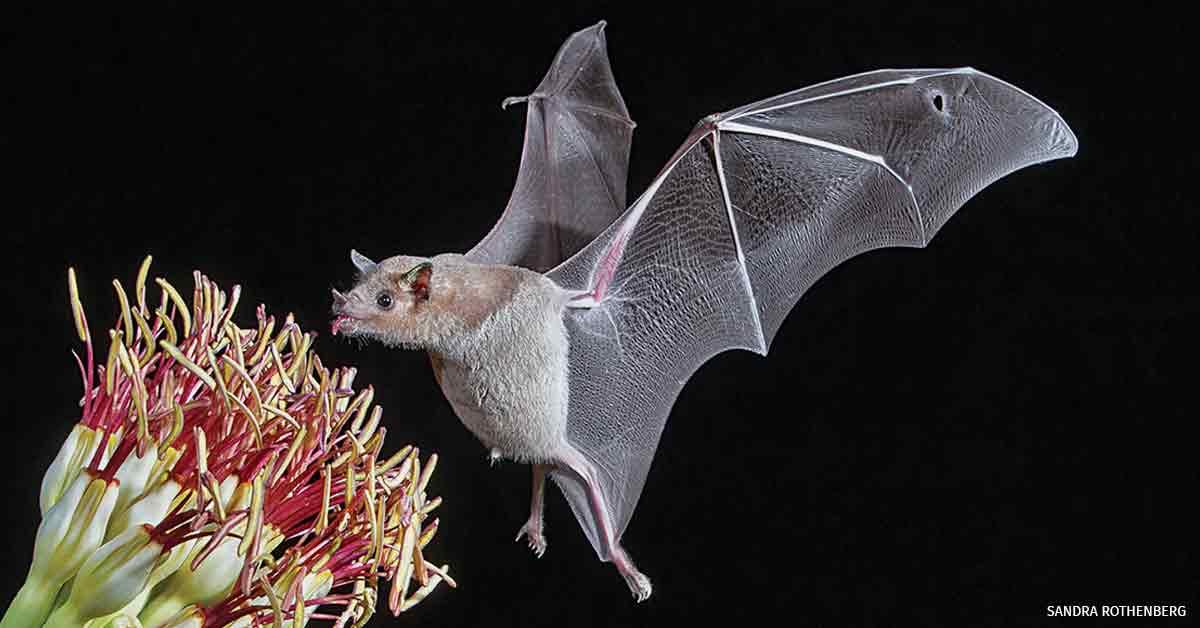 How to Make Backyard Bats Feel at Home