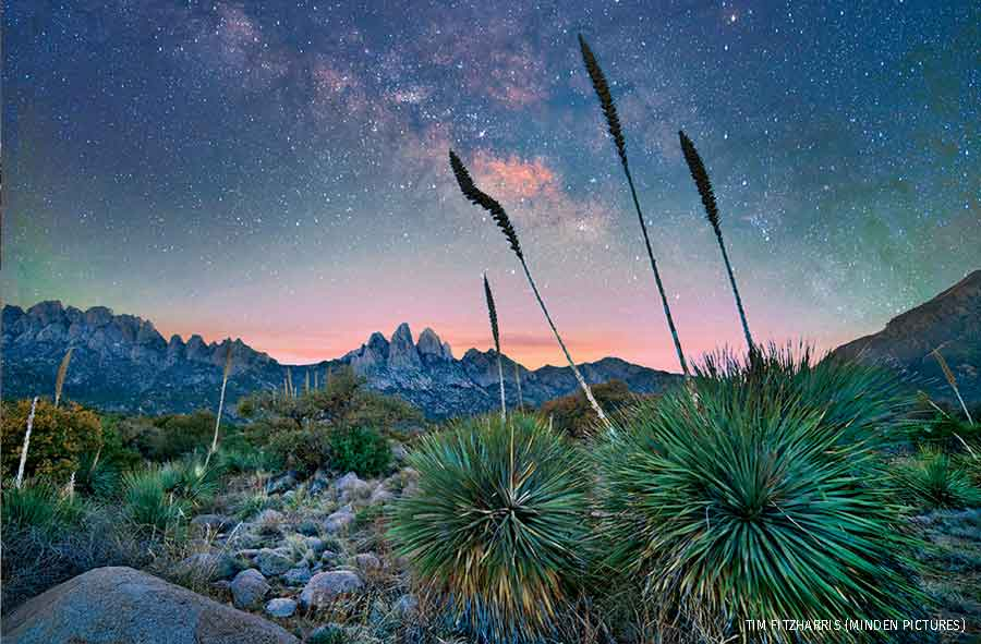 Agave group at night, Organ Mountains-Desert Peaks National Monument, New Mexico.
