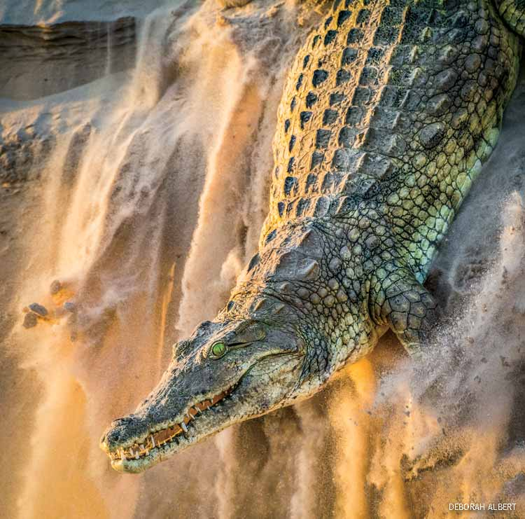 Other Wildlife First Place: Nile crocodile