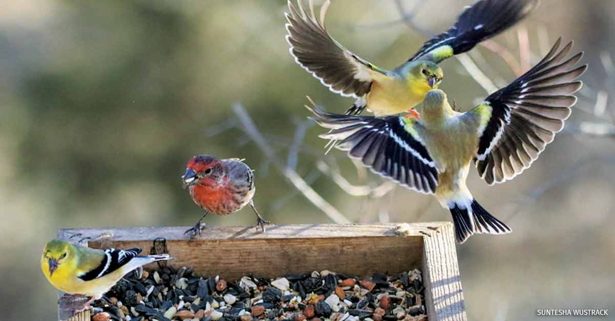 Keeping Backyard Birds Safe