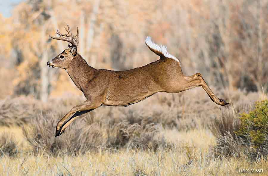President's View: Facing the Threat of Wildlife Disease