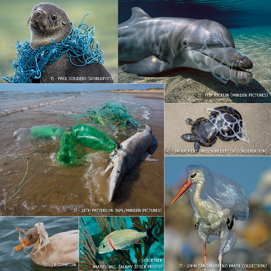 Animal Plastics Phone Number – Cvs.com® is not available to customers or patients who are located outside of the united states or u.s.