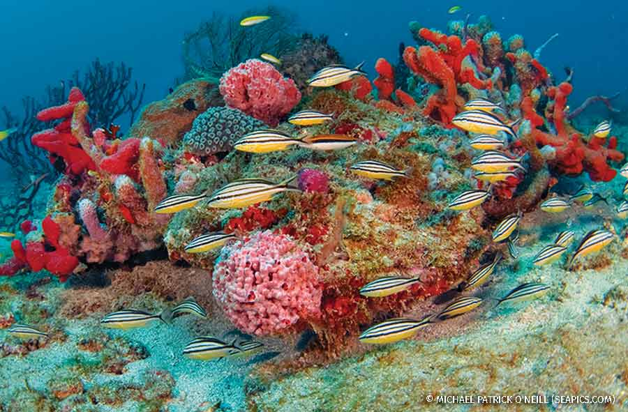 Coral Reef in Palm Beach, Florida