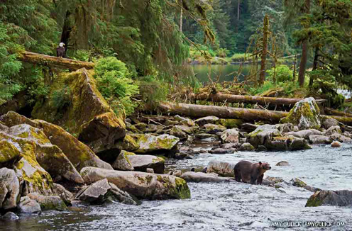 Anan Creek, Tongass National Forest, Alaska