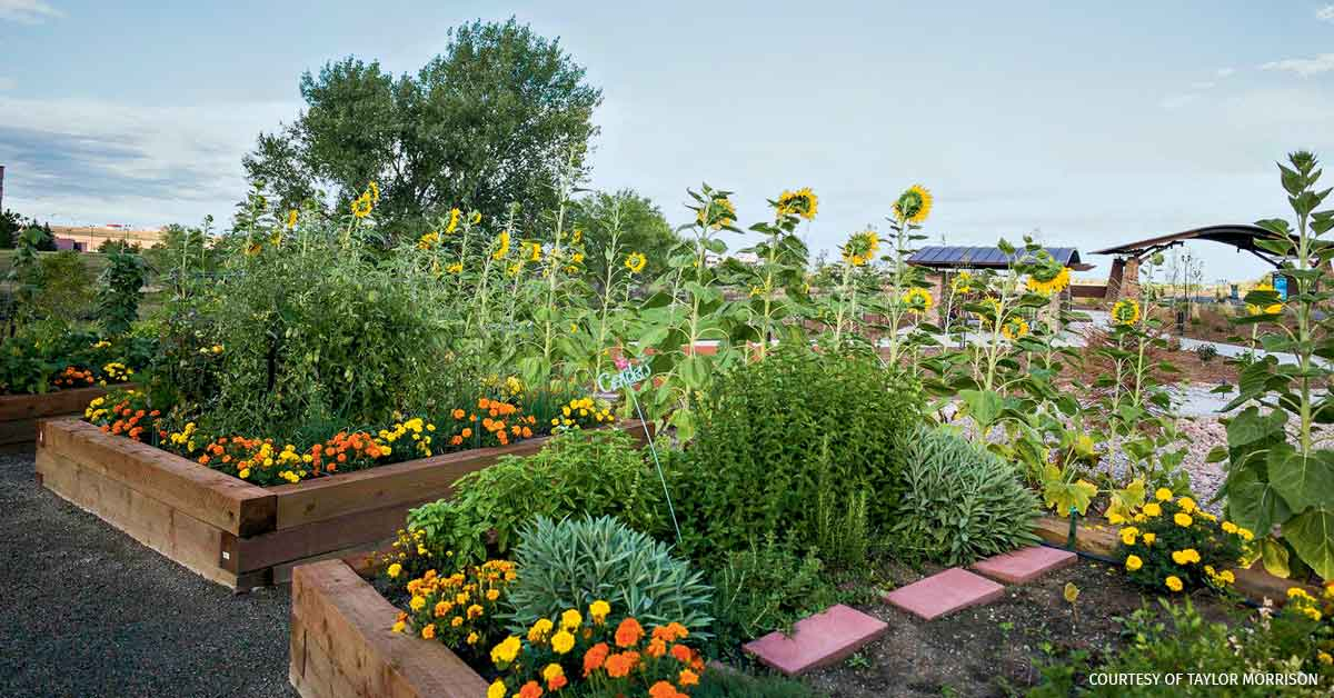 A traditional herb and ornamental garden at a Taylor Morrison community in Colorado