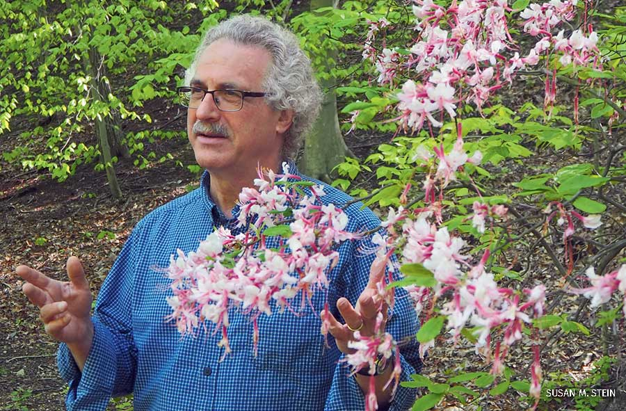 During a springtime walk near his home in Washington, D.C., botanist and NWF Chief Scientist Bruce Stein points out a native pinxterbloom azalea.