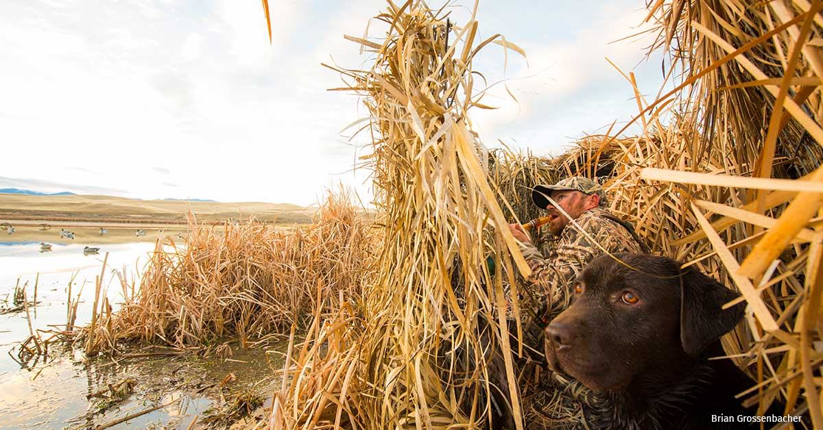 A man and his dog hunt waterfowl