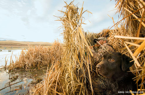 "In a Montana duck blind, Dan ""Rooster"" Leavens and his dog, Willie."