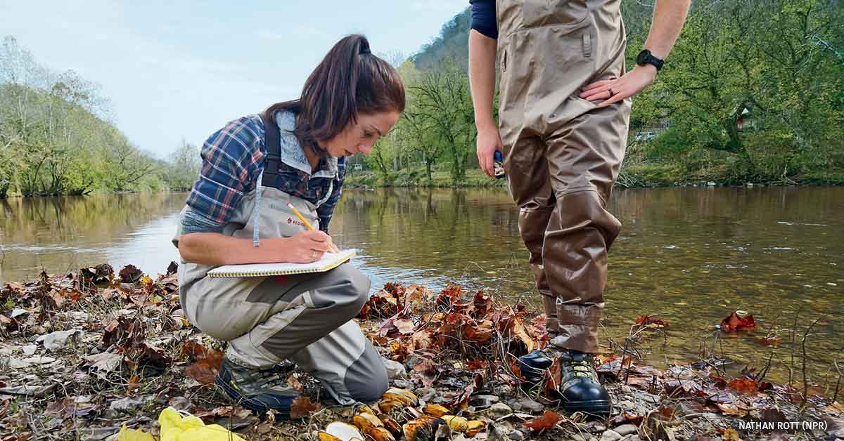 Biologist Rose Agbalog documents the number and types of dead mussel species she finds during a brief survey