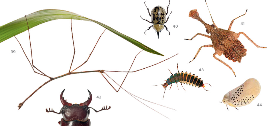 A composite of various insect species