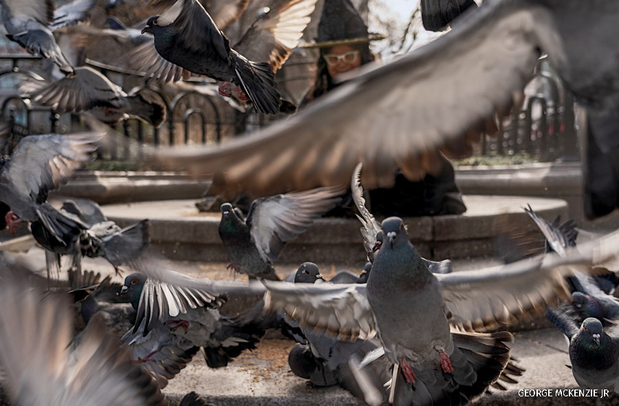 A flock of pigeons fly in New York City