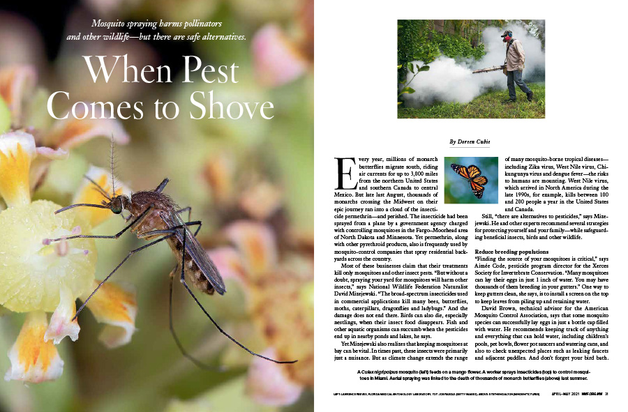 "A spread of the ""When Pest Comes to Shove"" opener featuring a mosquito, a man spraying for mosquitos and a butterfly."