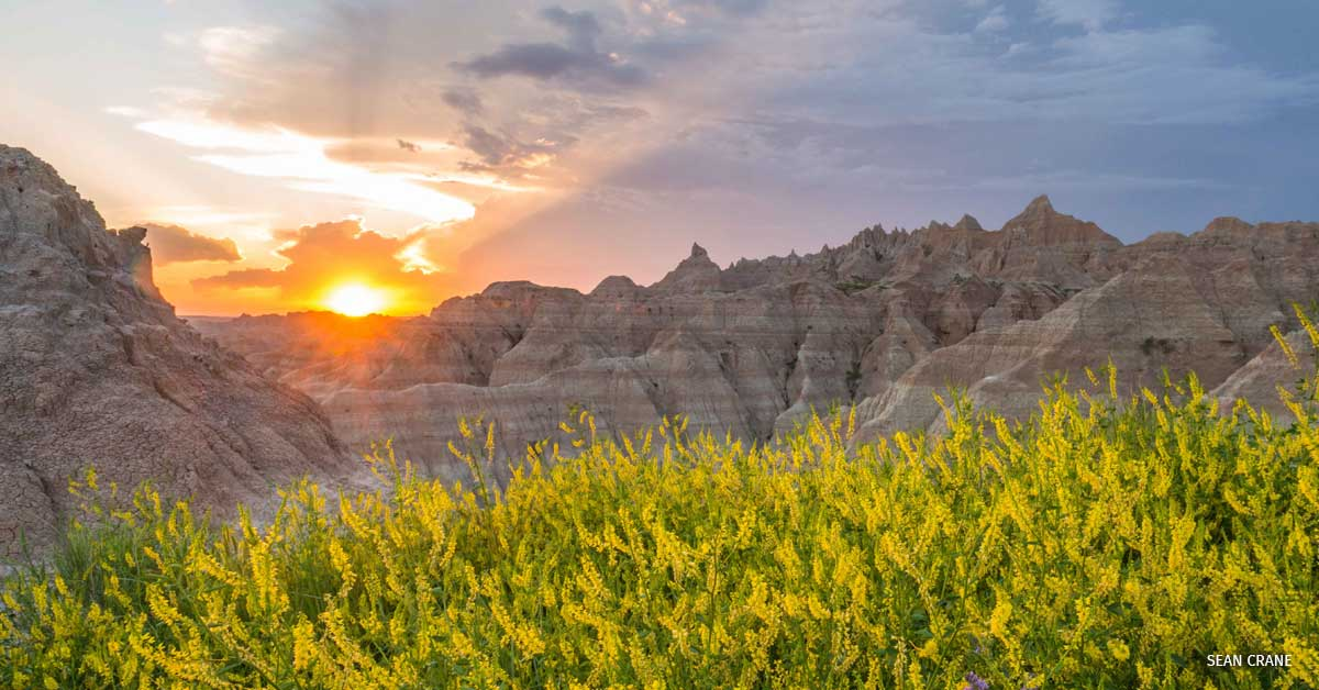 A landscape of yellow flowers and mountains in Badlands National Park, South Dakota.