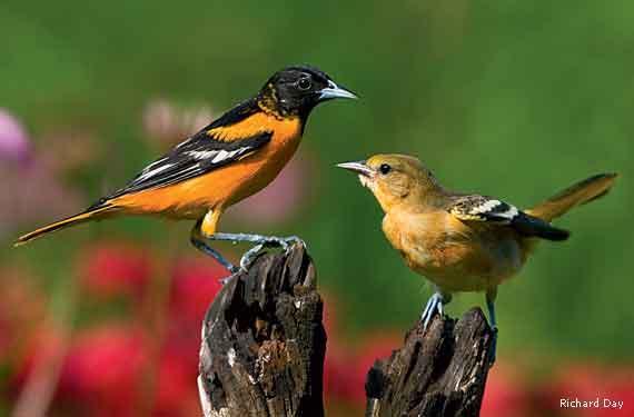 Backyards + Birds = Pretty Pictures