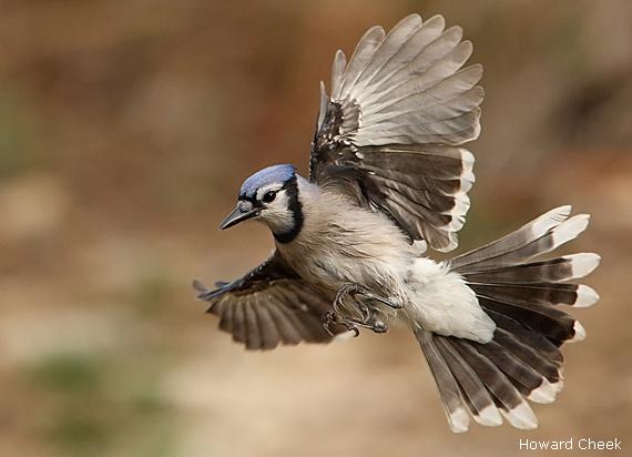 Backyard Birds Of Texas Hill Country - House Backyards
