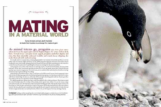 Sexual selection in penguins
