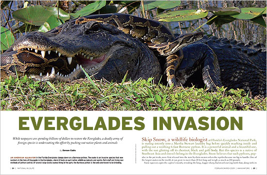 Everglades Invasion