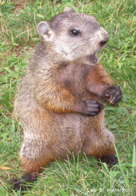 the truth about groundhog day