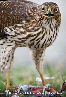 When Birds Become Bird Food