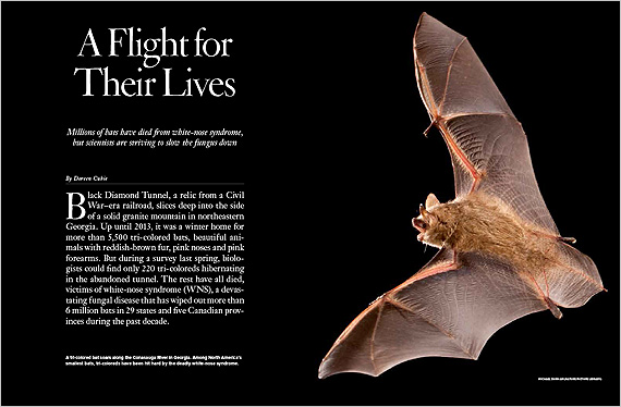 A Tri Colored Bat Soars Along The Conasauga River In Georgia Among North America S Smallest Bats Coloreds Have Been Hit Hard By Deadly White Nose