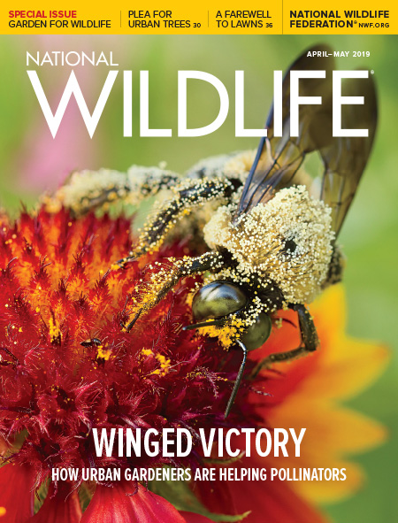 National Wildlife's April-May 2019 Issue cover