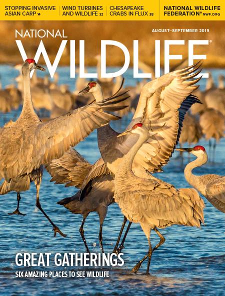 National Wildlife® Magazine   National Wildlife Federation