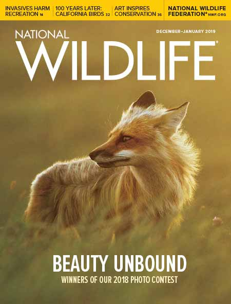 National Wildlife's Dec-Jan 2019 Issue cover