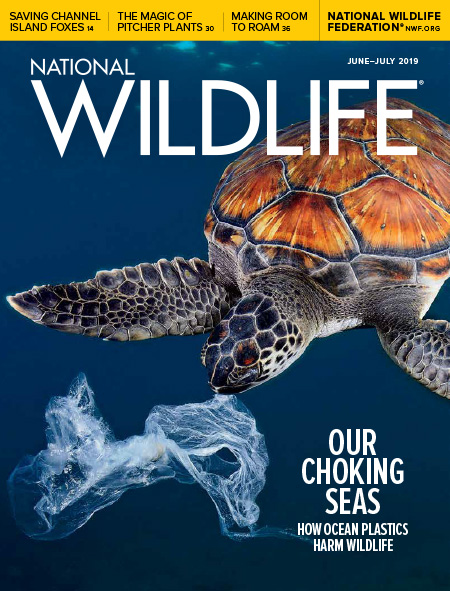 National Wildlife's June-July 2019 issue