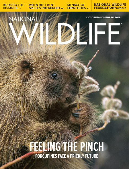 National Wildlife's Oct-Nov 2019 Issue cover