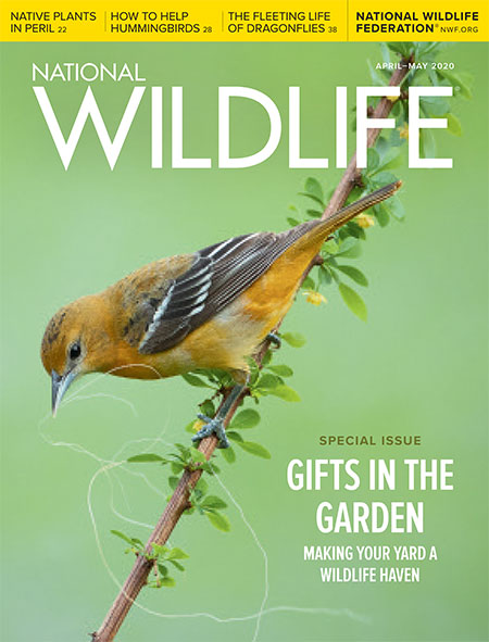 National Wildlife April May 2020 Cover