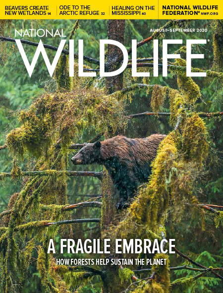National Wildlife August-September 2020 Cover featuring a black bear in a tree in Tongass National Forest