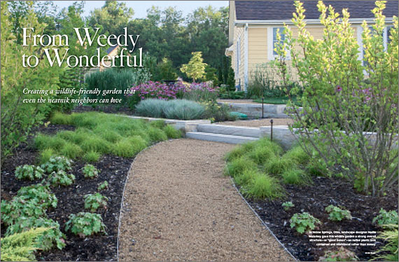 Weedy to Wonderful on native perennial garden, native wildflower garden, native plant garden, native bee habitat,