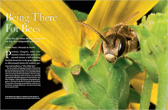 Being There for Bees