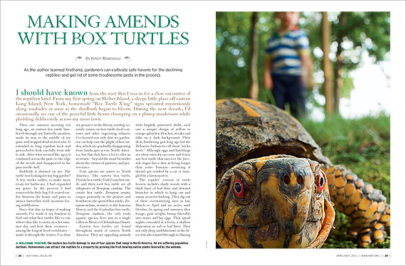 Making Amends with Box Turtles