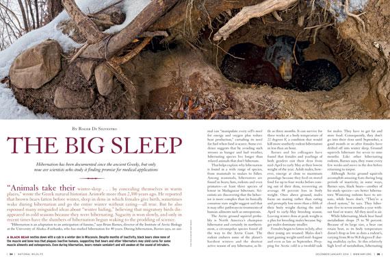 hibernation the big sleep. Black Bedroom Furniture Sets. Home Design Ideas