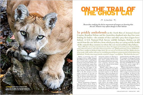 Cougars On the Trail of the Ghost Cat