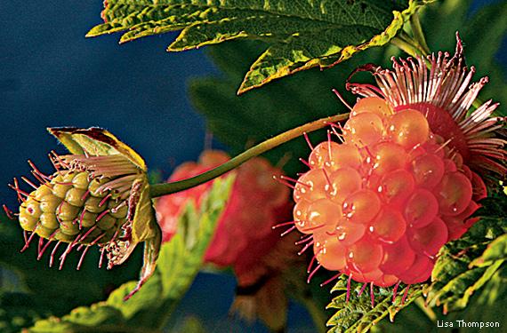 Ten American Native Plants You Can Eat