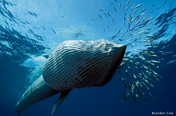 A photographer 39 s close encounter for The fish that ate the whale