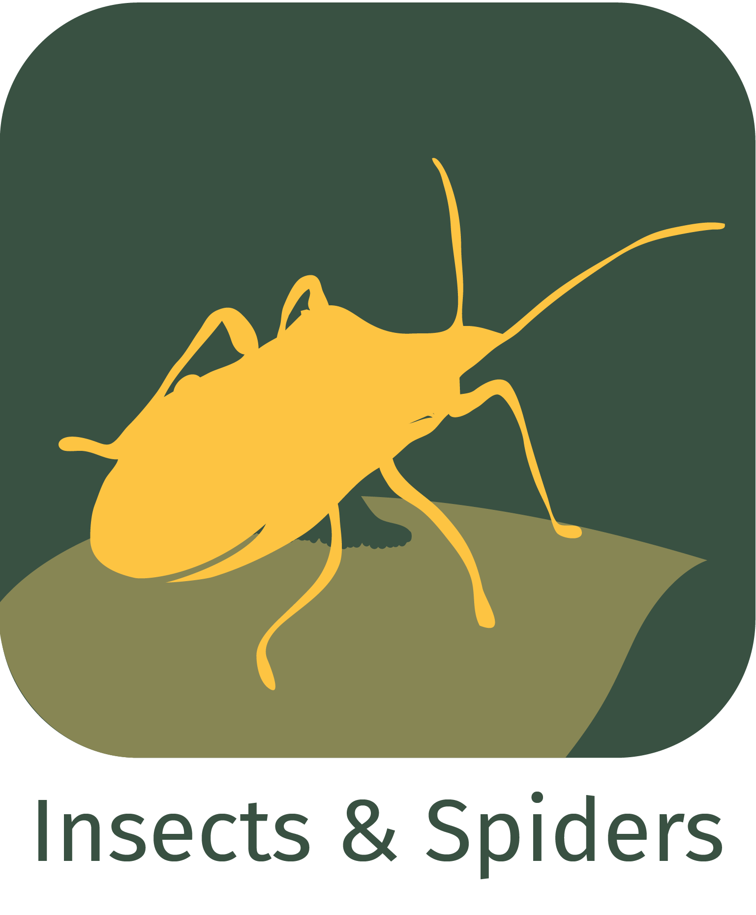 insects and spiders app icon