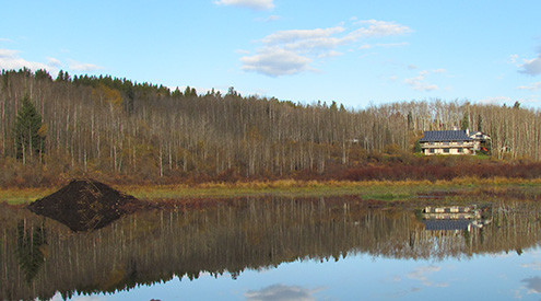 beaver pond and house