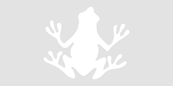 Placeholder Image for Amphibian Animal