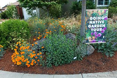 Garden In CA: J Kehoe
