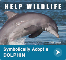Symbolically adopt a dolphin