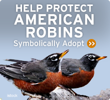 Help Wildlife. Symbolically adopt an american robin today!