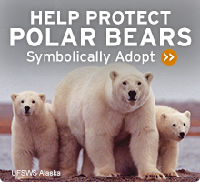 Help Wildlife. Symbolically adopt a polar bear today!