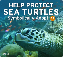 Help Wildlife. Symbolically adopt a sea turtle today!