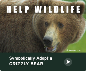 Adopt a Grizzly Bear!