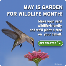 May is Garden for Wildlife month. Certify today!